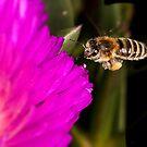 Dam pollen by wildrider58