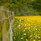 Yellow Heze by Stephen J  Dowdell
