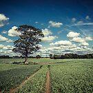 Rainhill Landscape by AndrewBerry