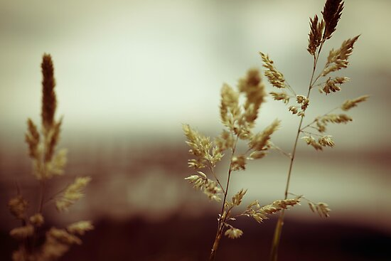 Grass in the rain by lesslinear