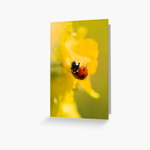Macro of a red ladybug in yellow flowers Greeting Card