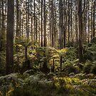 Sherbrooke Forest by Shari Mattox-Sherriff