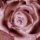 MAUVE ROSE CONTEMPORARY ART by Shoshonan