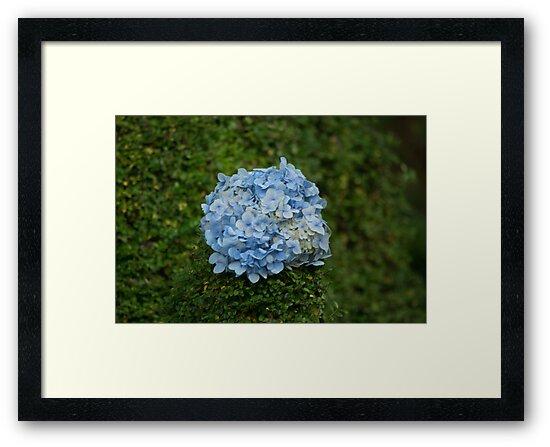 Blue Flower Ball by Jeanne Peters