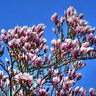 Spring is finally here ........ by Jacqueline van Zetten