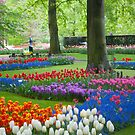 Keukenhof Gardens by Cathy Jones