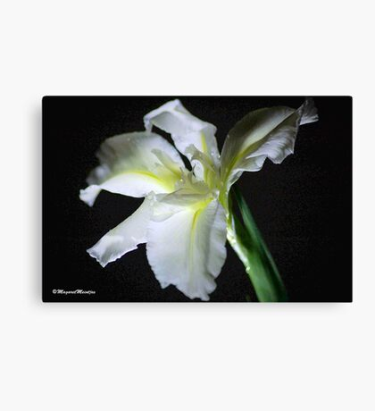 SIMPLICITY - THE WATER IRIS IN WHITE - WATER IRIS Canvas Print
