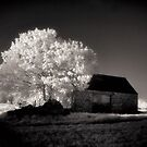 The Old Barn and the Tree by Cat Perkinton