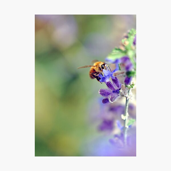 Busy Buzzy Bumble Photographic Print
