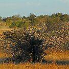 A flock of birds by Anthony Goldman