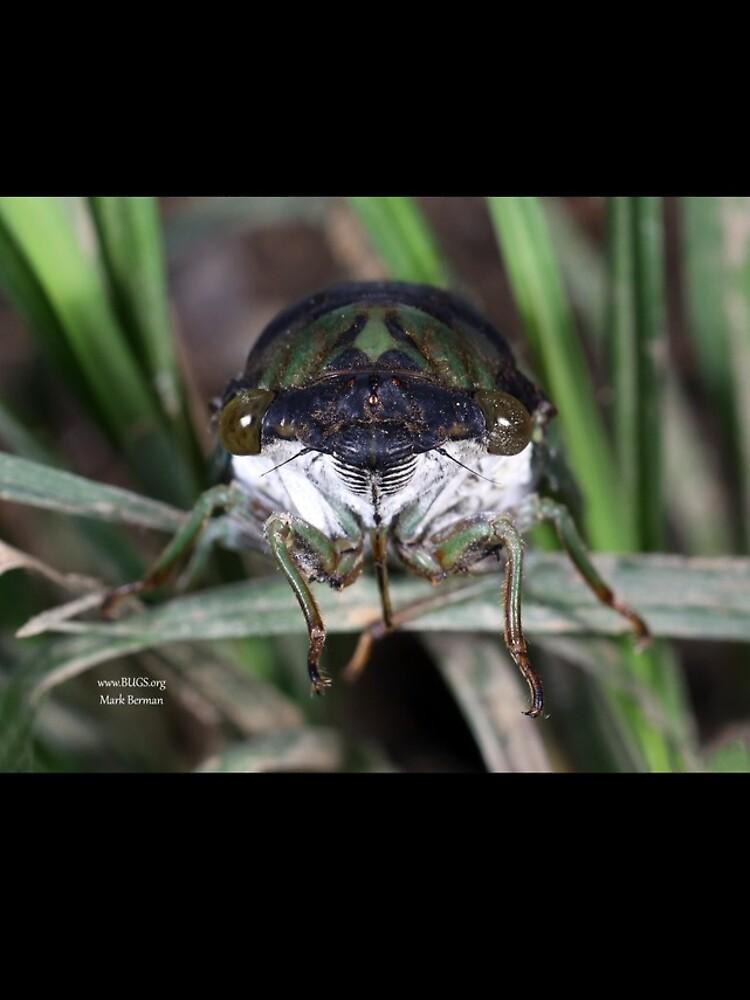 Cicada Face by mark-bugs-org