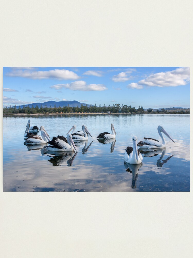 Alternate view of Pelicans at Wagonga Inlet Photographic Print