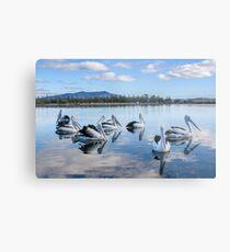 Pelicans at Wagonga Inlet Metal Print