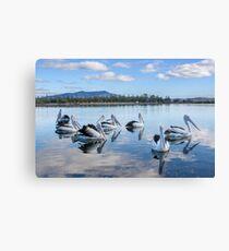 Pelicans at Wagonga Inlet Canvas Print