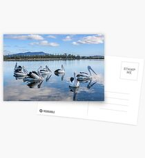 Pelicans at Wagonga Inlet Postcards