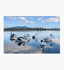 Pelicans at Wagonga Inlet Photographic Print