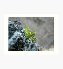 Branching Lichen Art Print