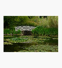 Hobart water-lilly garden Photographic Print