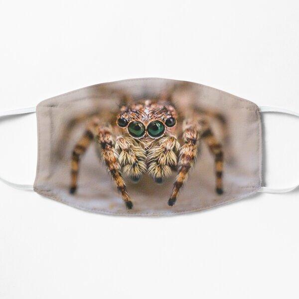 Orange-Brown Jumping Spider in The Kitchen Flat Mask
