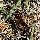Butterfly by Jess Meacham