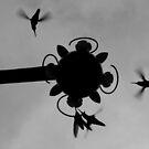 Hummingbirds #3 by Jess Meacham