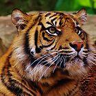 Eye of the Tiger von Len  Gunther