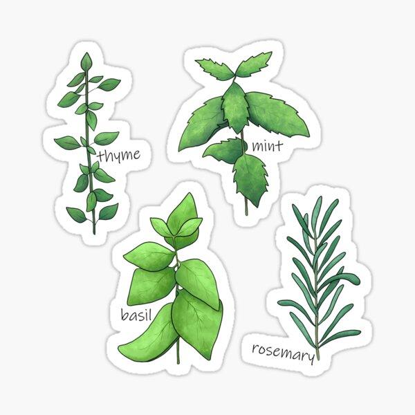 Set of Four Herbs Sticker