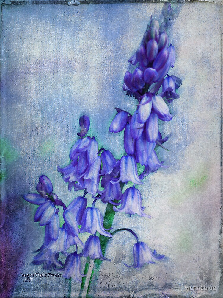 Bluebell Delight by viennablue