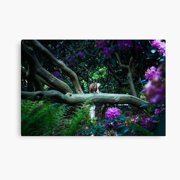 squirrel 005 Canvas Print