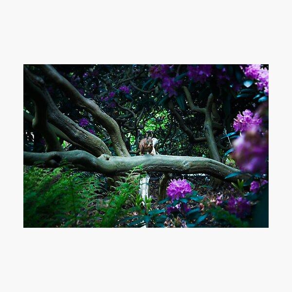 squirrel 005 Photographic Print