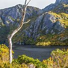 fagus and lake by bluetaipan