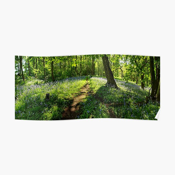 Bluebells in Spring Crag Wood Poster