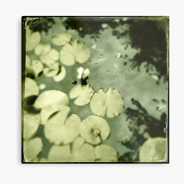 Lily Oh Lily Metal Print