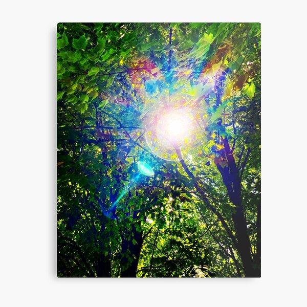 Sun through the leaves Metal Print
