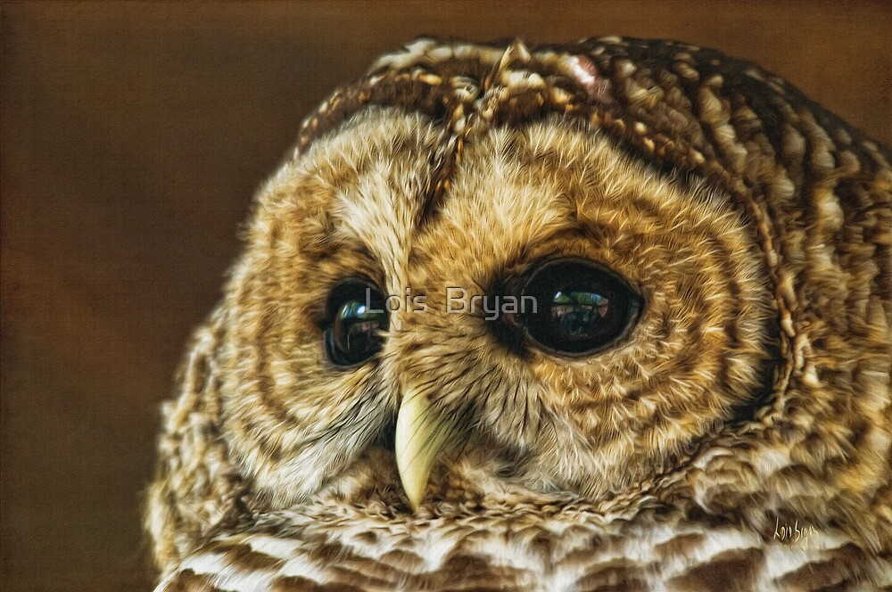 My What Big Eyes You Have by Lois  Bryan