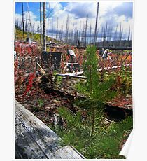 ~ Life Emerges After The Fire ~ Yellowstone Poster