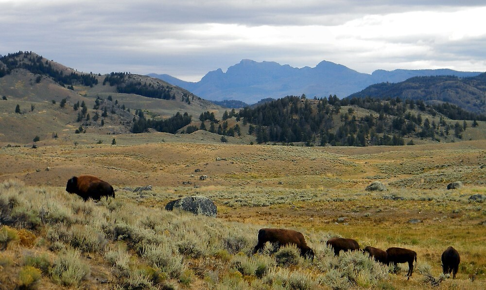 ~ The Landscape of Yellowstone National Park ~ by Brion Marcum
