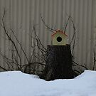 Icelandic Bird House by antonio55
