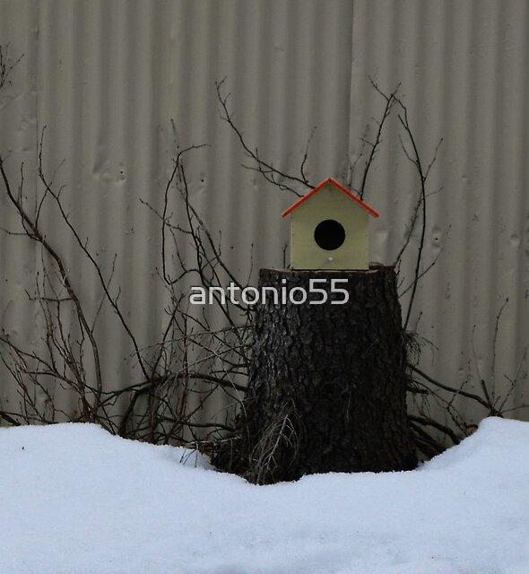 Icelandic Bird House by antonio55