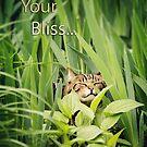 Follow Your Bliss... by KBritt