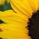 Sunflower by Annie Underwood
