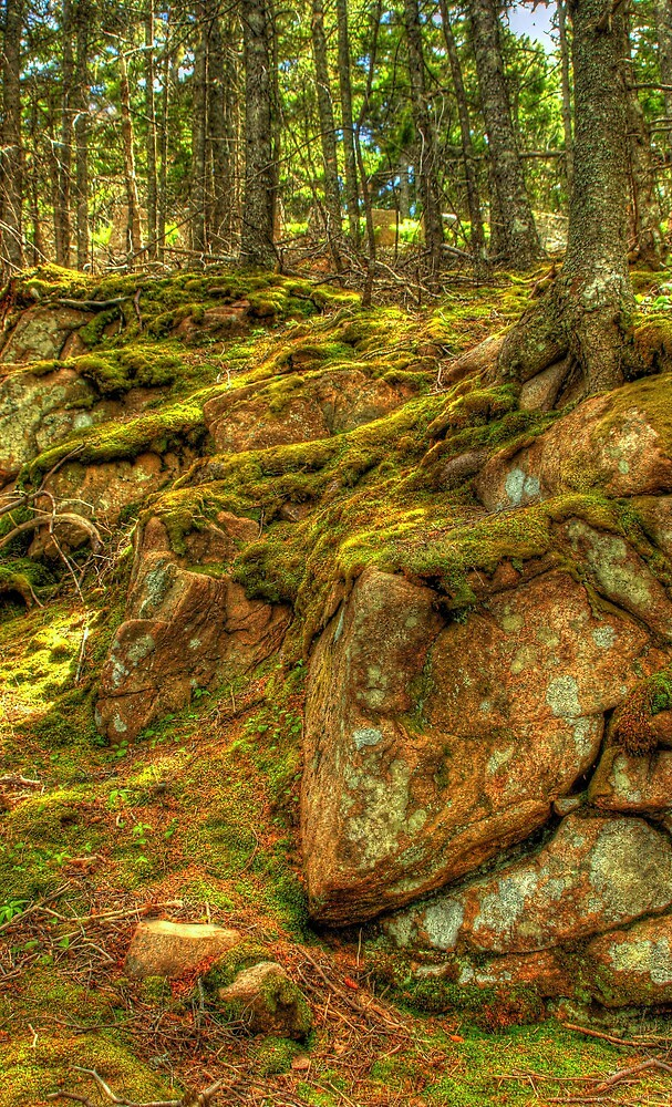 Acadia National Park, Maine, USA by fauselr