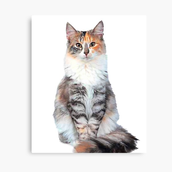 Siberian Cat Norwegian Forest Cat Himalayan Cat Cymric Cat Siamese Cat Canvas Print