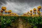 Chance of Rain by Dan Mihai