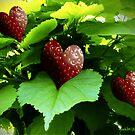 A taste of summer by Annabellerockz