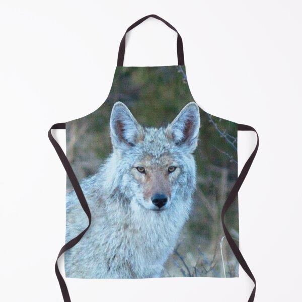 Watercolor Coyote 14, Estes Park, Colorado, Grey Light Lingering Apron