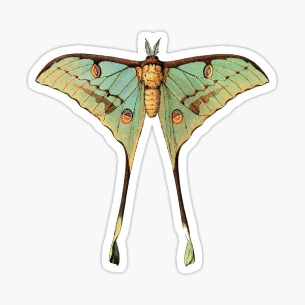 argemme (luna moth) Sticker