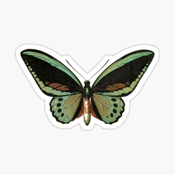 priam (priam's birdwing) Sticker