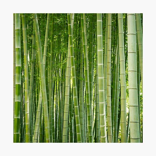 Bamboo Everywhere Photographic Print