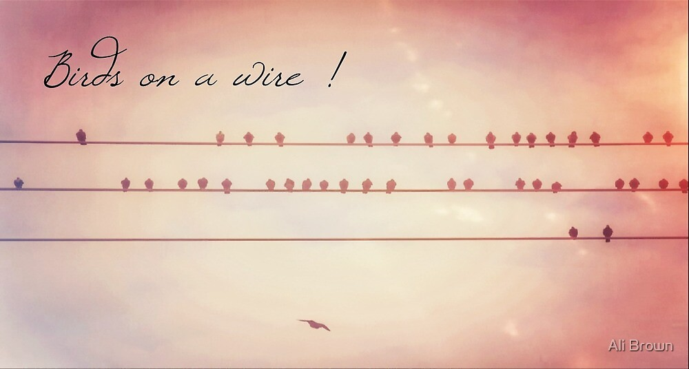 Birds on a wire  by Ali Brown